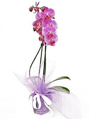 orkide1.jpg2.jpg